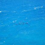 Der pinke See und Kalbarri