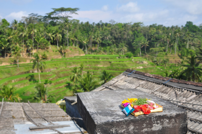 Religious Offering at rice terrace in Ubud, Indonesia