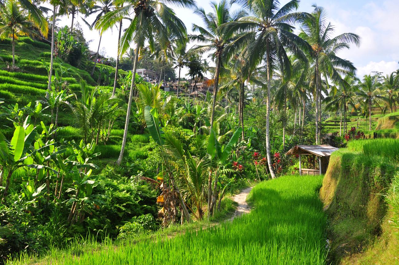 3 Wochen Bali, Lombok und die Gili Inseln – Part 1