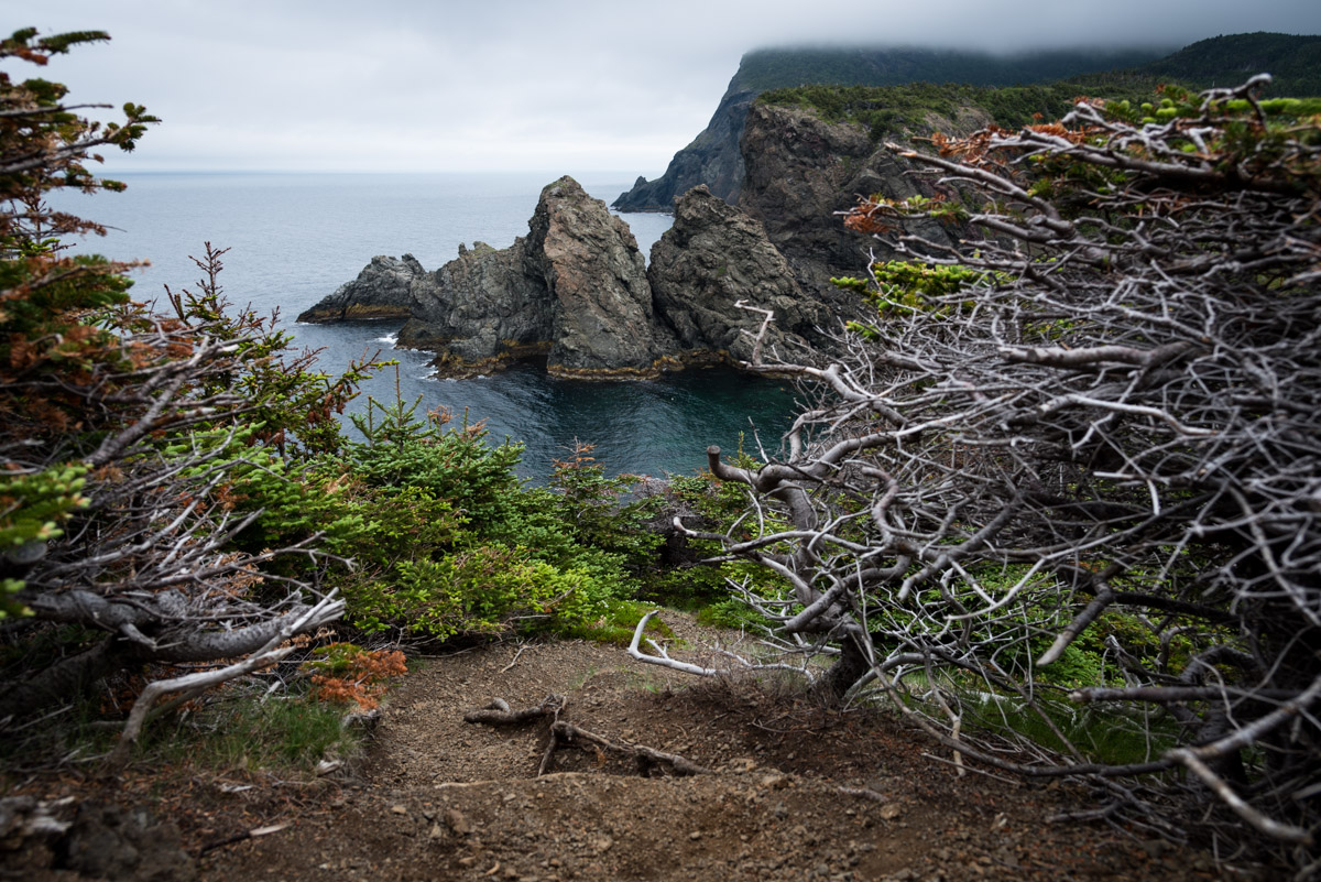 Bottle Cove Hiking Trail