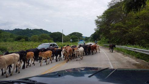 Stau in Ecuador