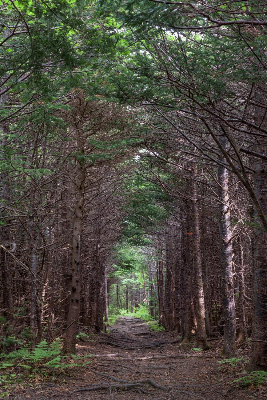 Cedar Cove Trail