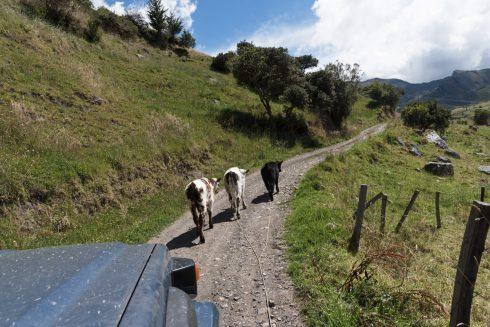 Stau im El Cocuy Nationalpark