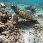 Die Gili Inseln – Indonesien #3