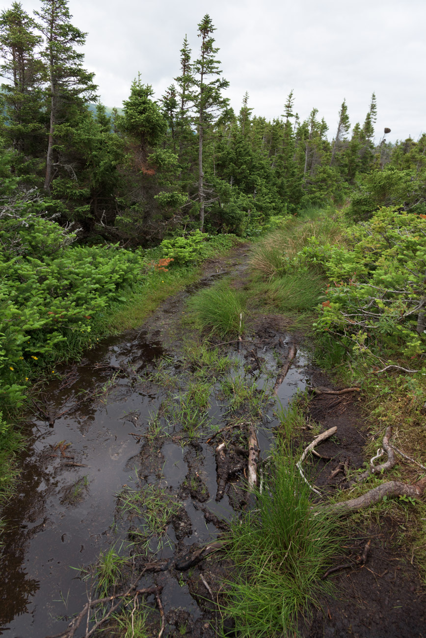 Der Western Brook Pond Trail