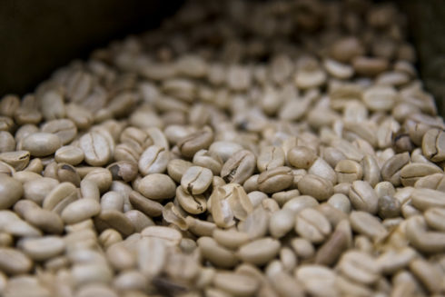 Kaffeebohnen - Qualitätsklasse 1