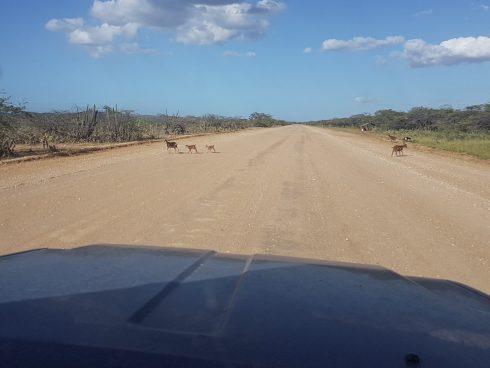 Der Highway nach Cabo de la Vela