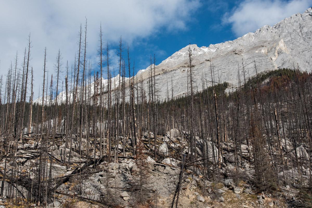 Waldbrand 2015