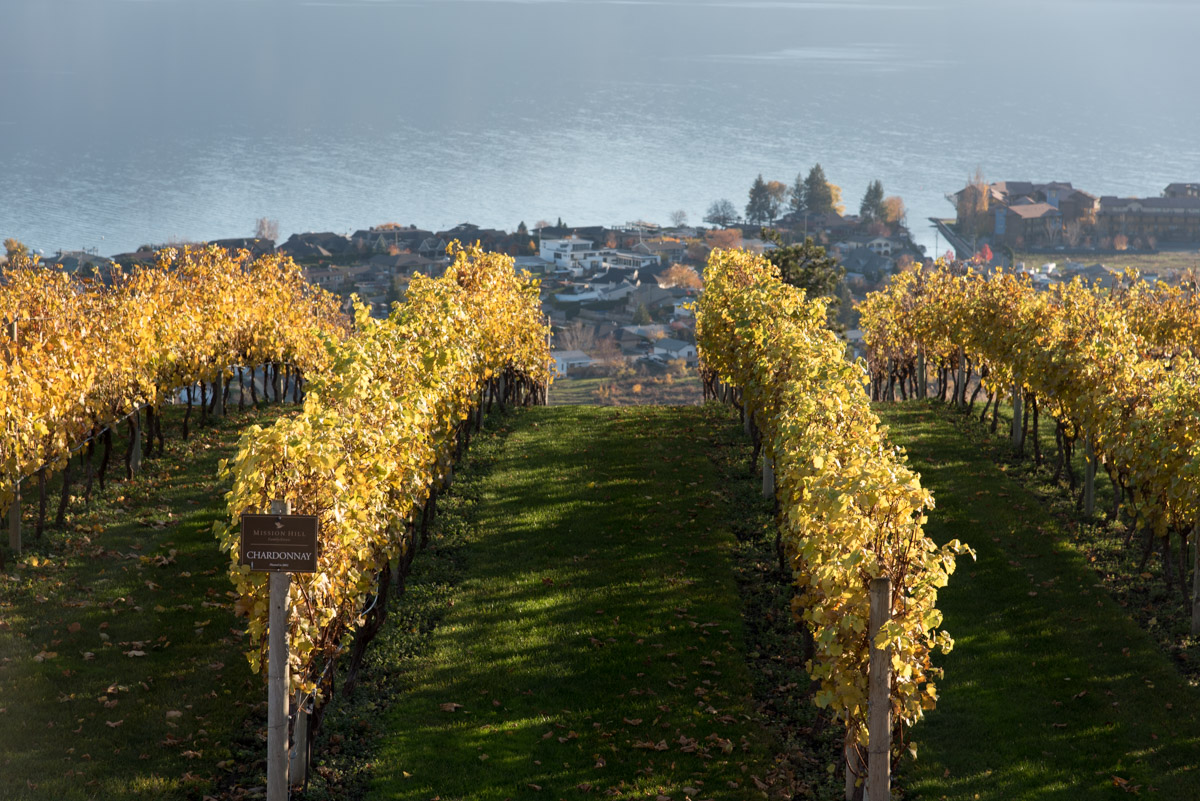 Mission Hill Winery