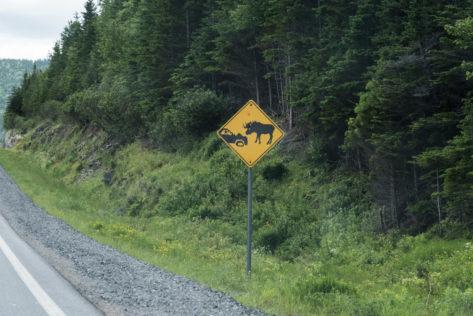 Vorsicht Elch