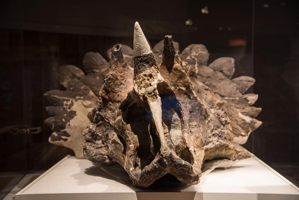 Hellboy - Regaliceratops peterhewsi
