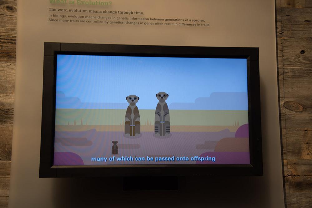 Schöne Animationen im Royal Tyrrell Museum