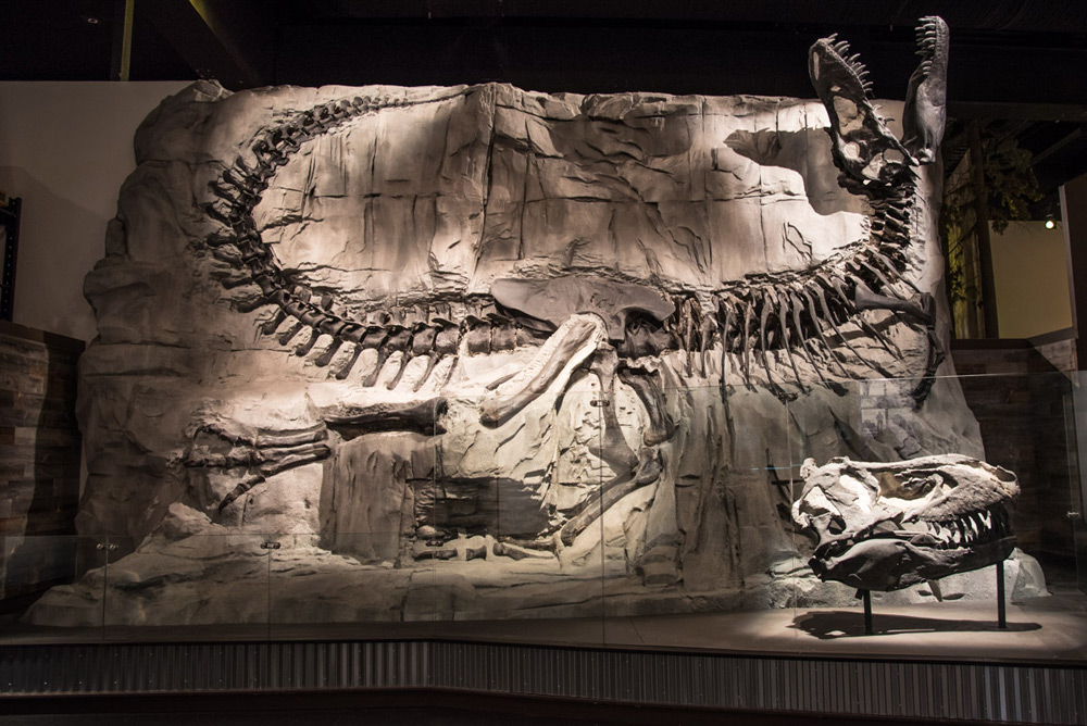 Black Beauty - Tyrannosaurus rex
