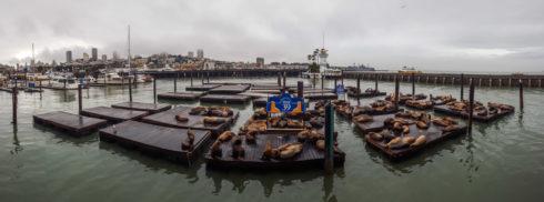 Pier 39 - Fisherman's Wharf