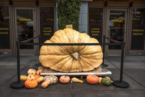 1626 Pfund (737 kg) Kürbis