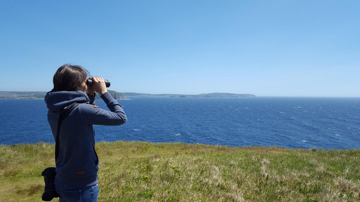 Steffi hält Ausschau nach Walen
