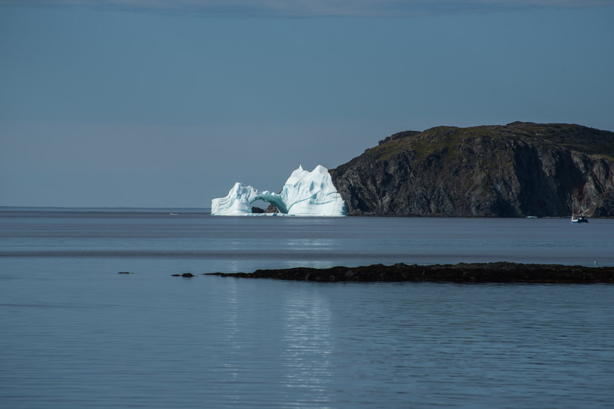 Eisberg in Twillingate