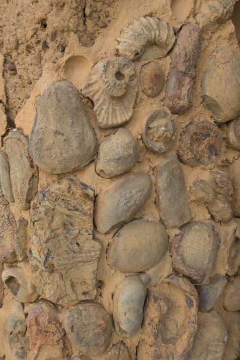 Ammoniten in Hausfassade