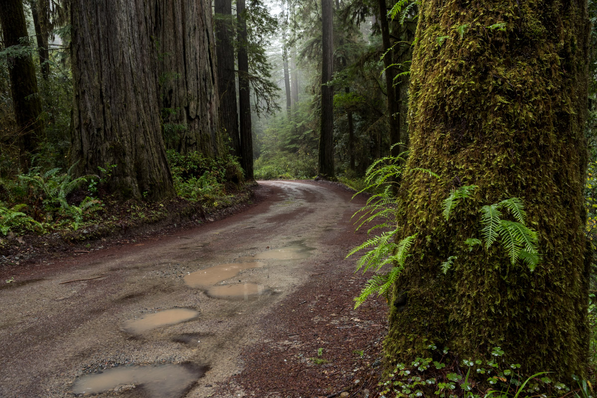 Redwoods State Park