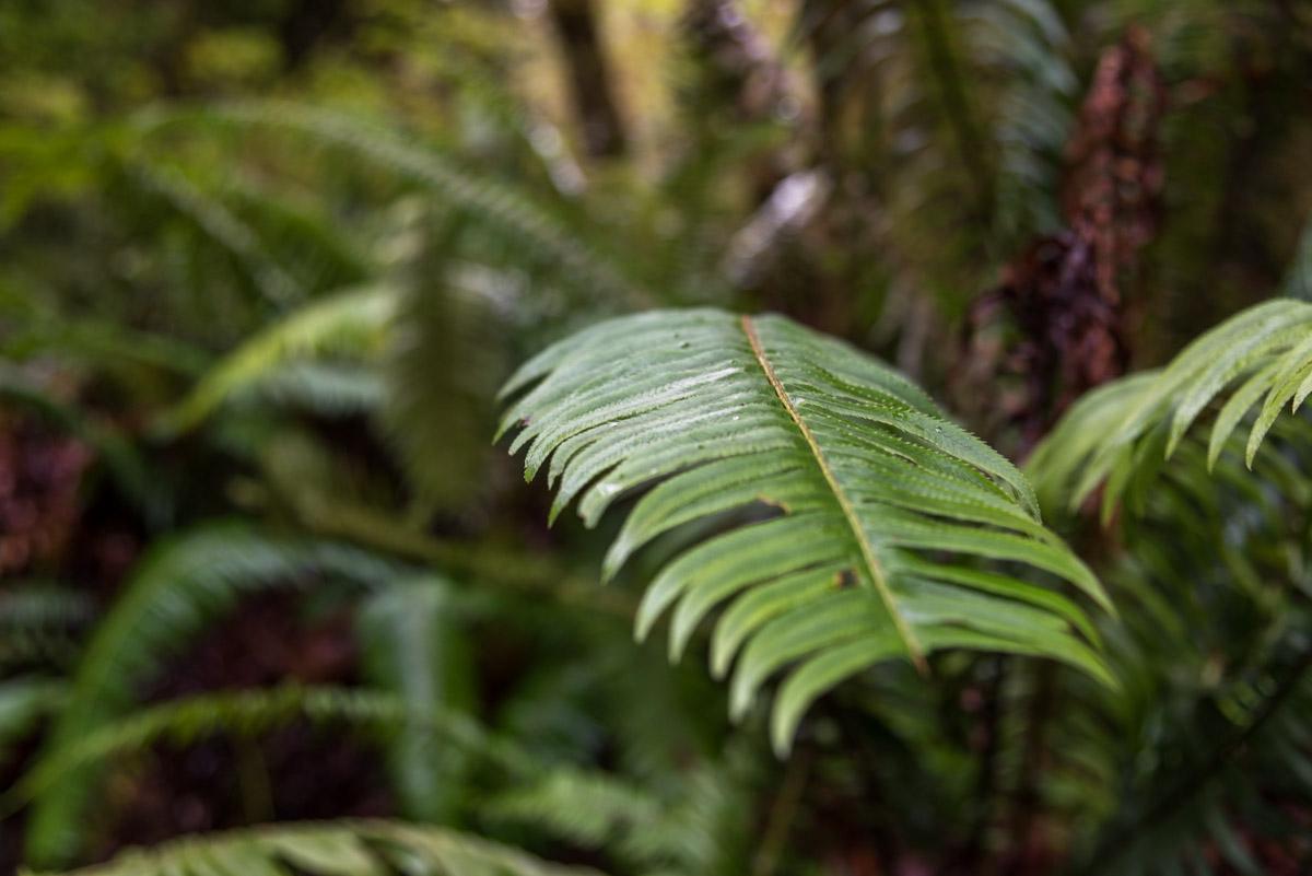 Redwoods State Park